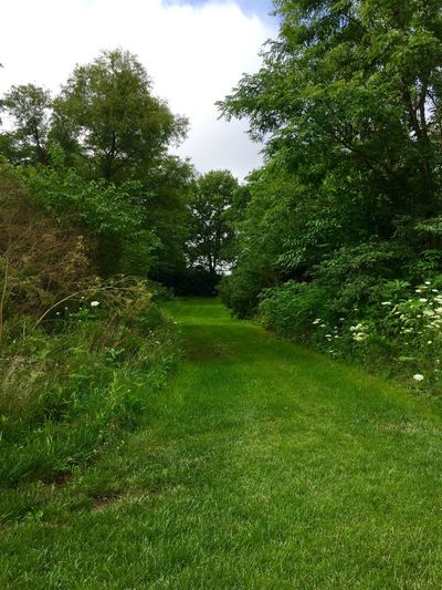 Green Grassy Lane Beauty In Nature Day Diminishing Perspective Field Footpath Grass Grassy Green Green Color Growth Idyllic Landscape Lush Foliage Nature No People Non-urban Scene Outdoors Plant Remote Scenics Sky The Way Forward Tranquil Scene Tranquility Tree