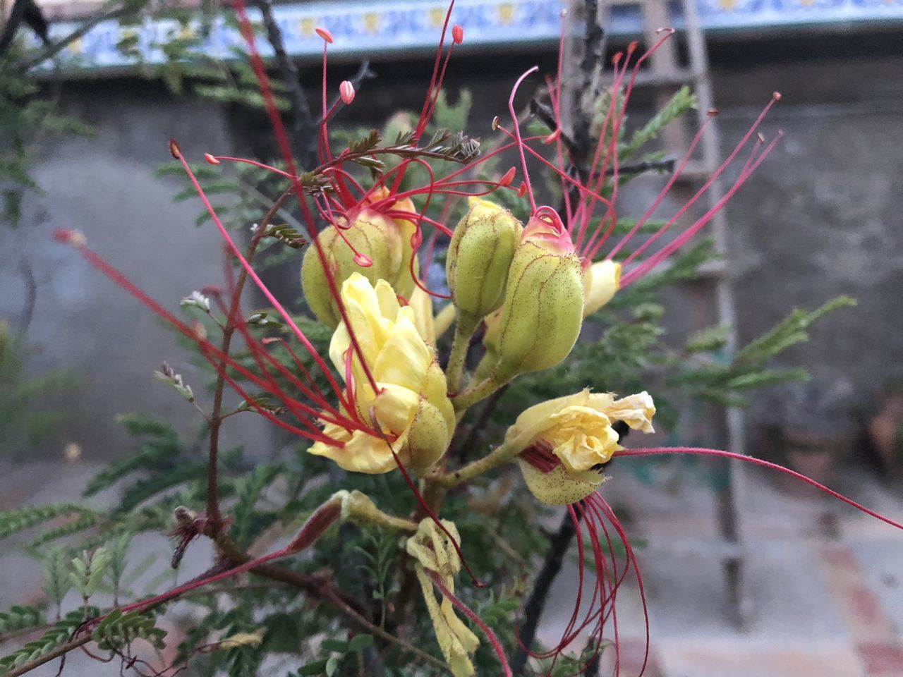 plant, flowering plant, flower, growth, beauty in nature, freshness, focus on foreground, close-up, nature, vulnerability, fragility, yellow, no people, day, inflorescence, bud, petal, flower head, outdoors, plant stem, pollen, wilted plant, sepal, bouquet