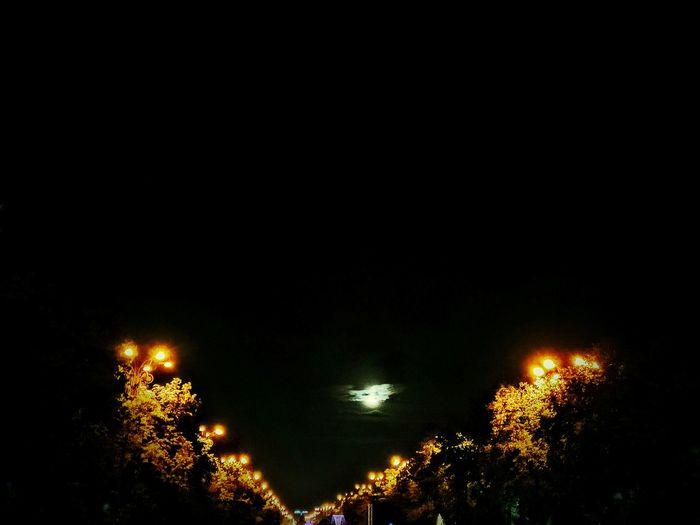 Illuminated Night Tree Street Light Dark Glowing Sky Tranquility Tranquil Scene Scenics Majestic Outdoors No People Darkness Moonlight