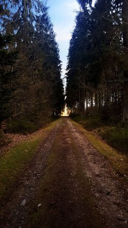 Abandoned Forest The Way Forward Tree Outdoors Shadow Nature Beauty In Nature EyeEmNewHere
