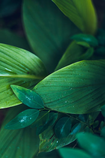 Green Color Growth Close-up Leaf Plant Part Plant Beauty In Nature Freshness No People Drop Nature Water Day Wet Selective Focus Food And Drink Outdoors High Angle View Leaves Dew RainDrop Purity