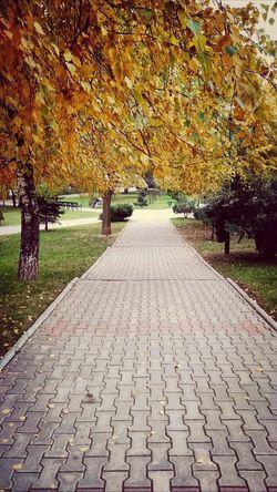 Autumn in Bucharest Bucureşti Romania