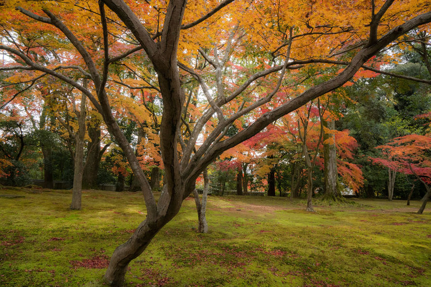 Autumn Beauty In Nature Branch Change Day Fall Grass Growth Landscape Nature No People Orange Color Outdoors Scenics Sky Tranquility Tree