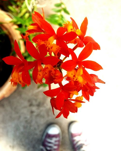 Nature's Diversities Vivero Flower Photography Flowers🌼