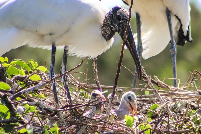 Close-up of birds perching on tree