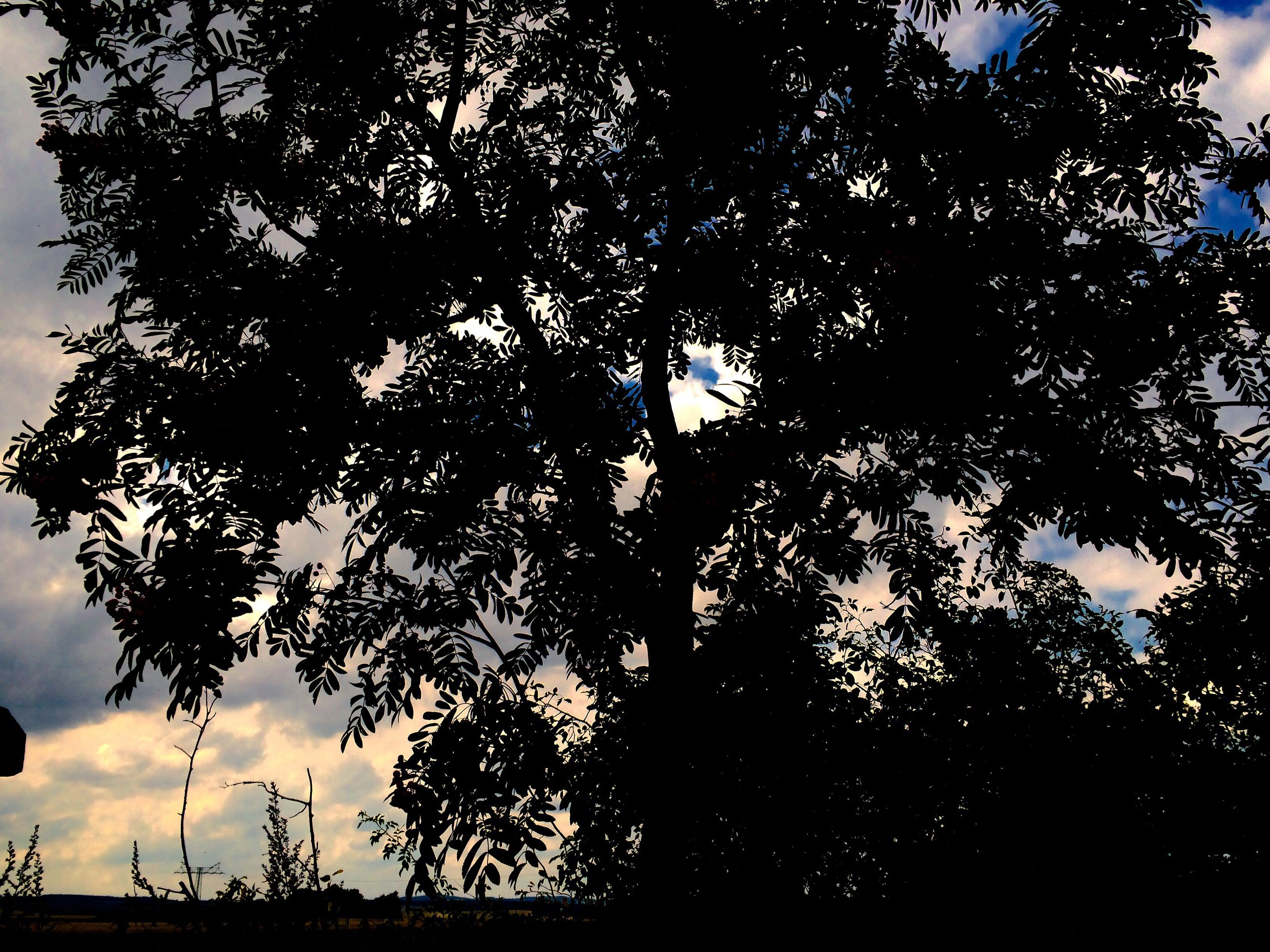 tree, silhouette, growth, low angle view, tranquility, nature, branch, sky, tranquil scene, scenics, beauty in nature, day, outdoors, outline, solitude, remote, dark, non-urban scene, no people, green, majestic
