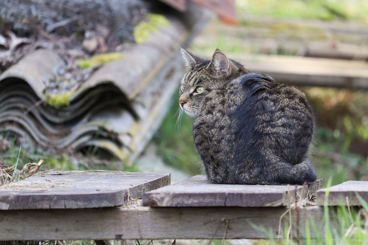 Cat sitting on wood