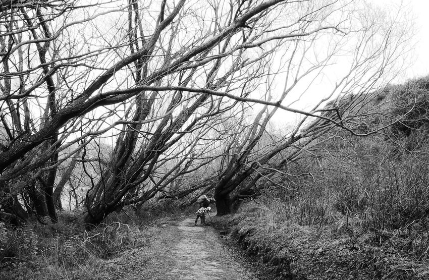 Bare Tree Bending Black And White Country Road Inspecting Nature Non-urban Scene Outdoors Fatherhood Moments