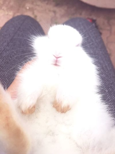 Rabbit Cute Cute Pets Boy Snowflake