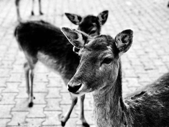 Looking left. Animals