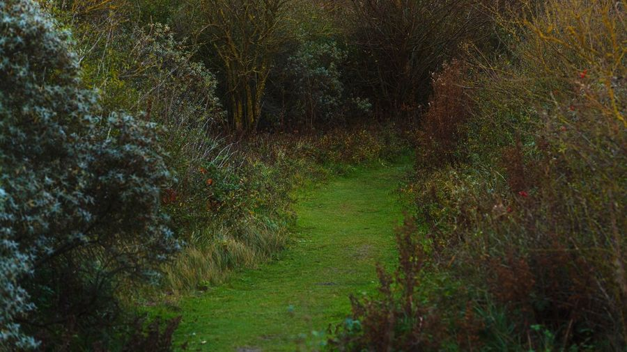 Dune path Tranquil Scene Tranquility Nature Growth Beauty In Nature No People The Way Forward Landscape Outdoors Green Color Autumn Dunes Netherlands Nikond750 Nikonphotography Hoekvanholland Seaside Exploring Seaside Nature Nature Path Green Bush