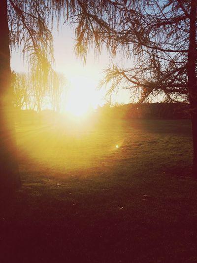 Winter Paris Sun Forest