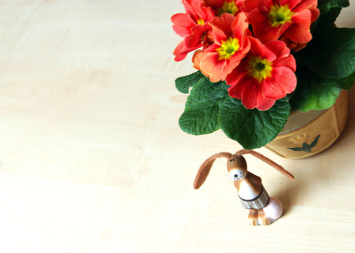 Easter bunny and red primrose on a wooden table Easter Easter Bunny Easter Easter Decoration Red Primrose primula Primula Table Wood Close-up No People Day Flower Flower Head Indoors  Still Life Copy Space Negative Space Neg Space Potted Plant Cute Funny long ears Long Ears Leaf