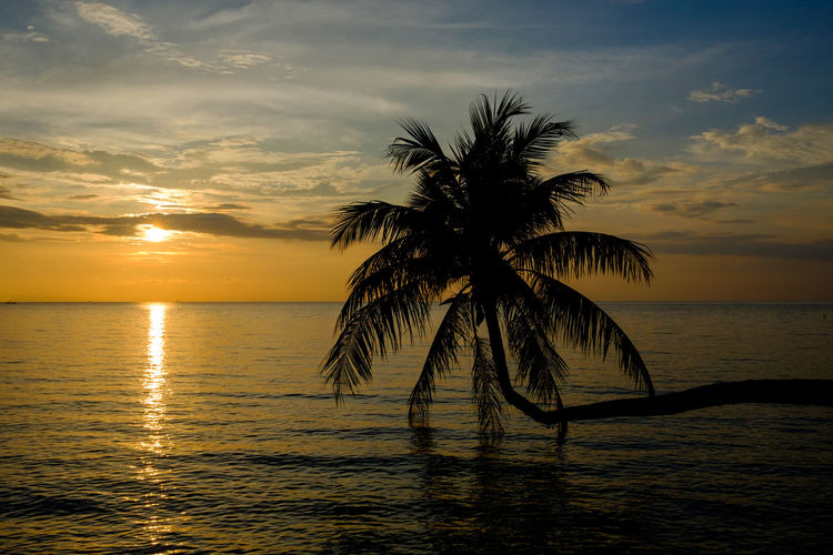 Silhouette Palm Tree Against Sea During Sunset
