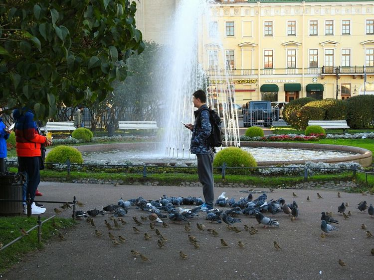 Birds🐦⛅ Dove Sparrows City Life Tourists From China Park Day Colors Of Sankt-Peterburg Walking Around Sankt-Petersburg Russia