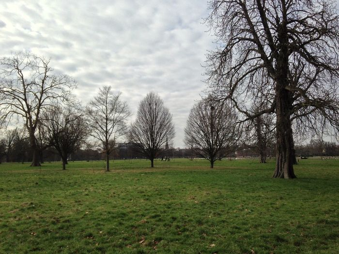 EyeEm LOST IN London Bare Tree Beauty In Nature Bleak Branch Day Field Grass Landscape Nature No People Outdoors Scenery Scenics Sky Tranquility Tree