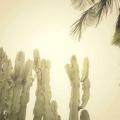 Fog and warmth. #ca #cactus #picoftheday #snapseed #camera+ #igla #iphonesia #igers_philly #monochrome #plants #photooftheday #statigram #webstagram #wearejuxt #newportbeach #silence Igla Whpfoggy Camera Newportbeach Cactus CA WeAreJuxt Plants Silence Monochrome Photooftheday Iphonesia Picoftheday Igers_philly Snapseed Statigram Webstagram
