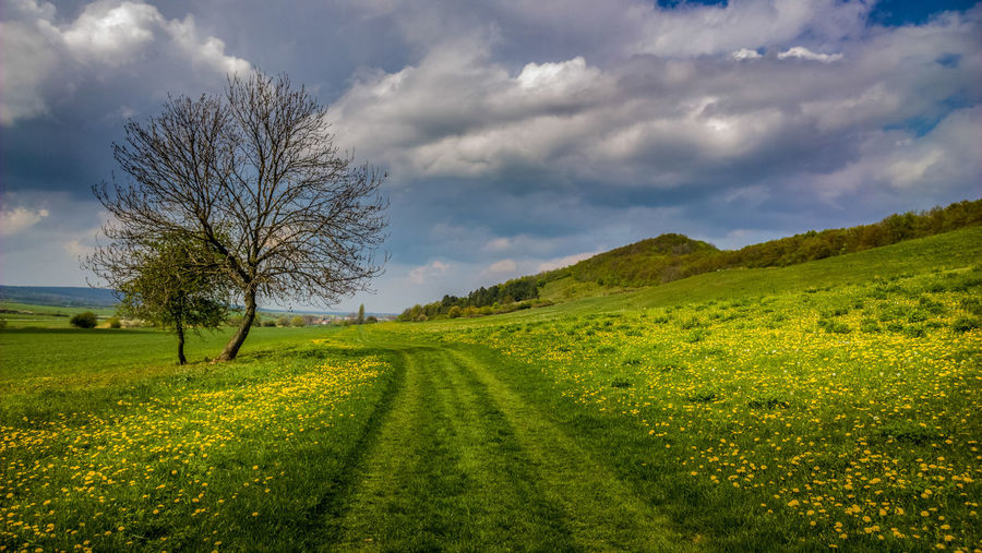 Thuringian landscape in springtime Agriculture Beauty In Nature Cloud Cloud - Sky Day Field Grass Green Color Horizon Over Land Idyllic Landscape Nature Non-urban Scene Outdoors Rapsfeld Rural Scene Scenics Sky Spring Springtime Thuringia Tranquil Scene Tranquility