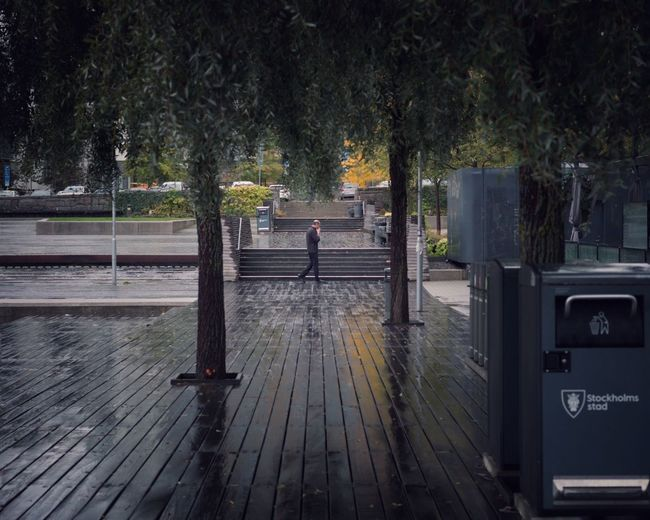 Stockholm rain Street Photojournalism Streetphotography Rain Plant Tree Nature Water No People Footpath Day Outdoors Street Built Structure Park