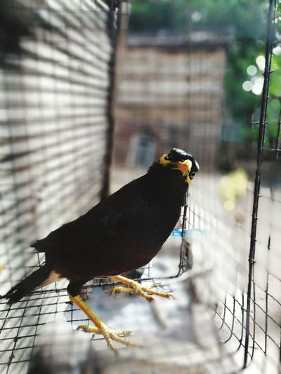 EyeEm Selects Bird Perching Bird Of Prey Winter Full Length Confined Space Close-up Animal Themes