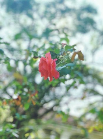 Flower Growth Petal Fragility Nature Beauty In Nature Flower Head Blooming Focus On Foreground Outdoors