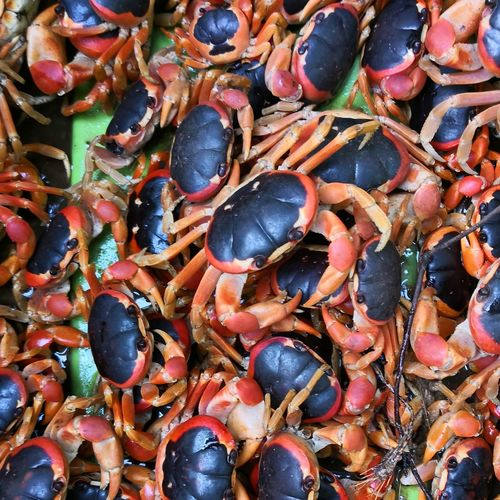 High angle view of crab