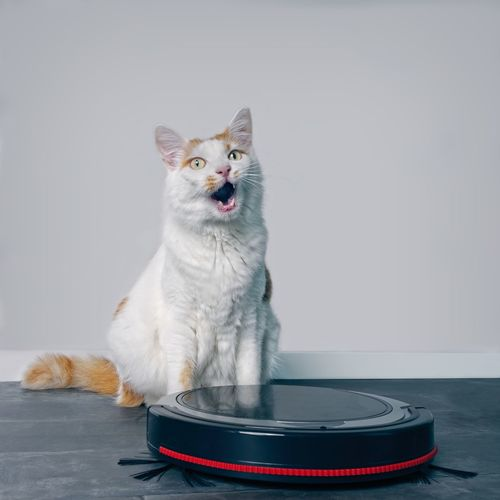 Cute tabby cat sitting behind a vacuum cleaner and grimacing.