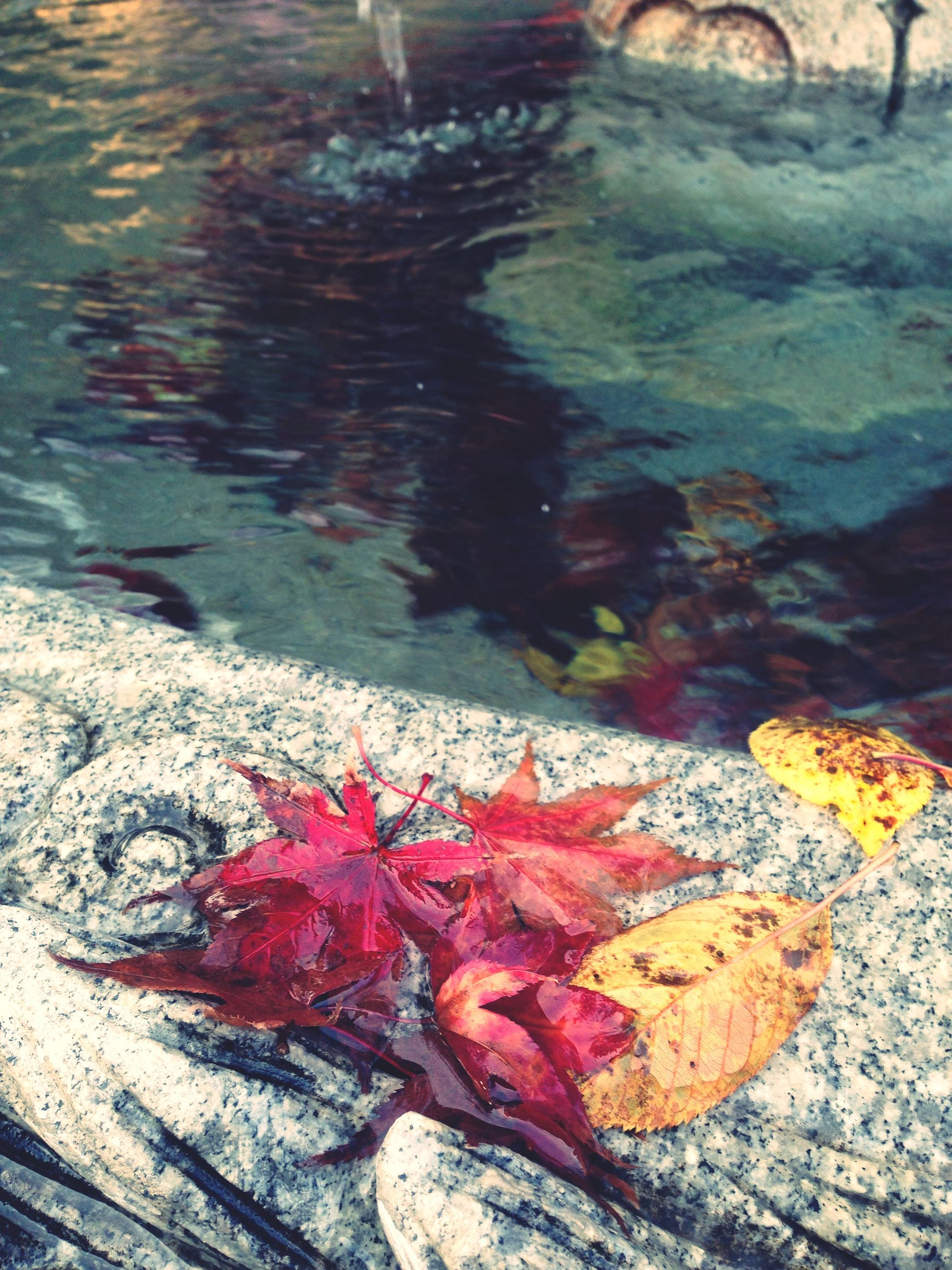 water, high angle view, leaf, nature, autumn, rock - object, change, fallen, outdoors, pond, close-up, day, season, red, no people, beauty in nature, wet, orange color, leaves, reflection