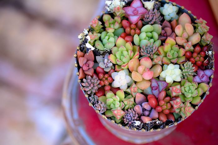 Succulent plant jewelry box🌱 Succulent Plant Succulents Gardening In My Garden Enjoying Life Freshness Circle High Angle View Plants 🌱 Close-up Growth Colorful Still Life