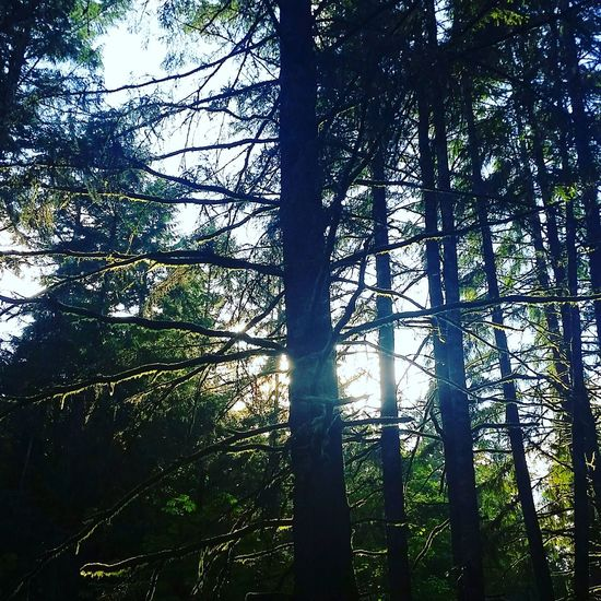 Beauty In Nature Life Green PNW Trees Moss Pacific Northwest