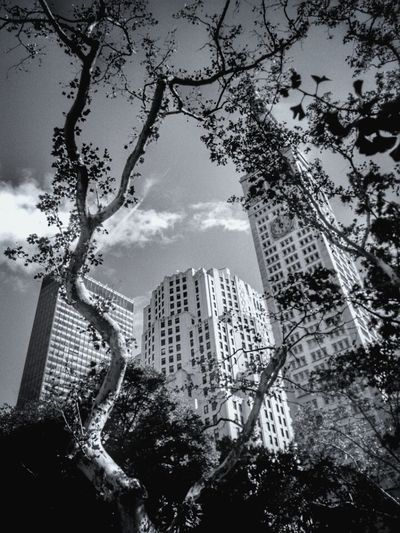 Madison Square Park NYC Skyscraper City Architecture Built Structure No People Cityscape Outdoors Newyorkcitylife Newyorknewyork New York Street Photography Black & White New York Blackandwhitephotography Tree Branches Newyork_ig Madisonsquarepark