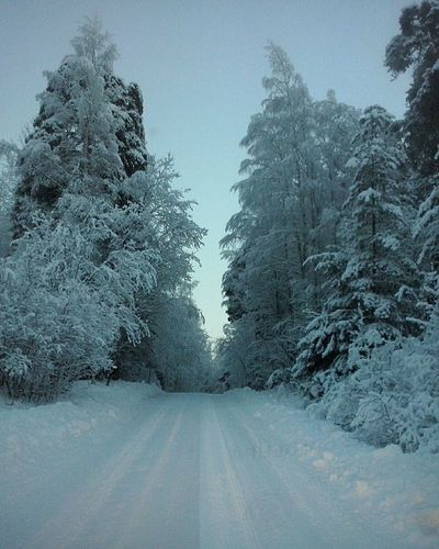Into the Blue Forest . Huggingatree  Nature Pastel Power Cold Temperature Snowy Scene No People Winter Outdoors Beauty In Nature Country Road