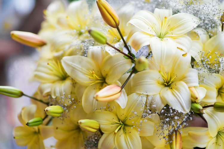Beautiful Celebration Cut Flowers EyeEm Best Shots Gardening Lily Nature Background Backgrounds Big Bouquet Bouquet Bouquet Of Lilies Celebration Event Close-up Flower Background Flower Head Full Frame Growth Lilac Lilies Lilys Plant White White Color Yellow