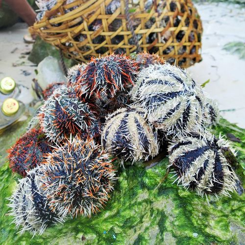 sea urchins Animal Themes Beauty In Nature Close-up Nature Sea Creatures Sea Life Seafood Seafoods SEAFOOD🐡 Spike Spikes Urchin Urchins