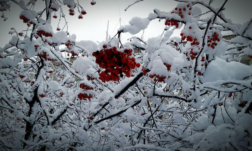 С-снежность;)
