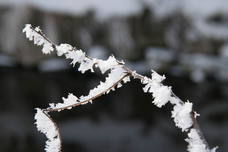 Close-up of frozen branch during winter