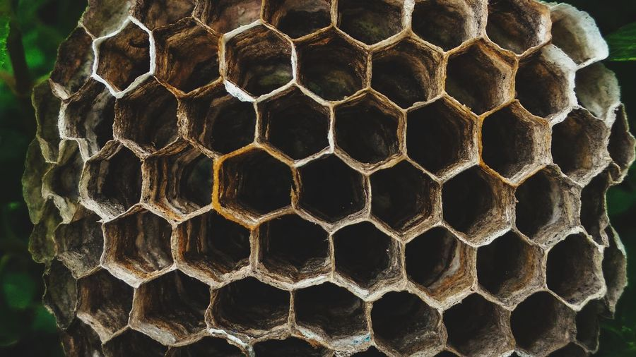 EyeEm Selects APIculture Honeycomb Bee Beehive Pattern Hexagon Geometric Shape Close-up Shape Triangle Three Dimensional Cell Color Gradient Bug Insect Forming