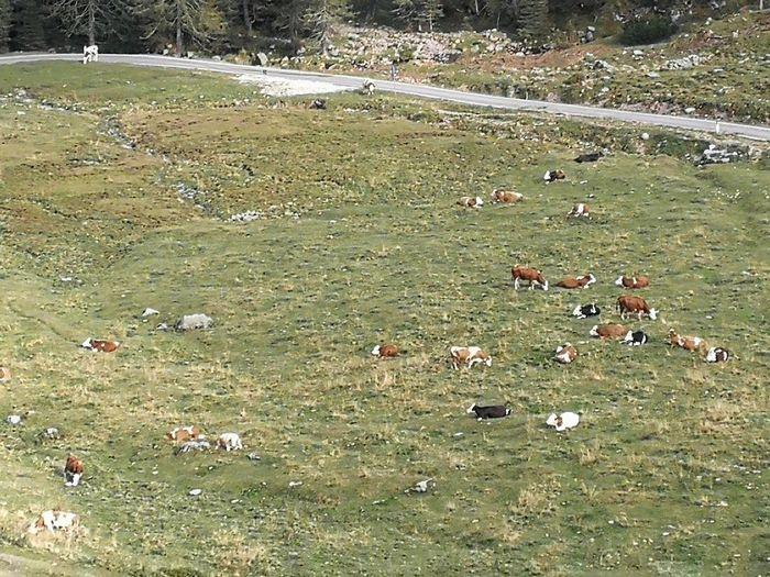 High angle view of flock of sheep on field