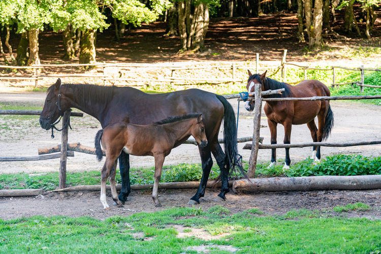 Horse family in stables Animal Animal Family Animal Themes Animal Wildlife Colt Day Domestic Domestic Animals Field Grass Group Of Animals Herbivorous Horse Land Livestock Mammal Motherhood In Nature Nature No People Outdoors Pets Plant Stables Tree Vertebrate