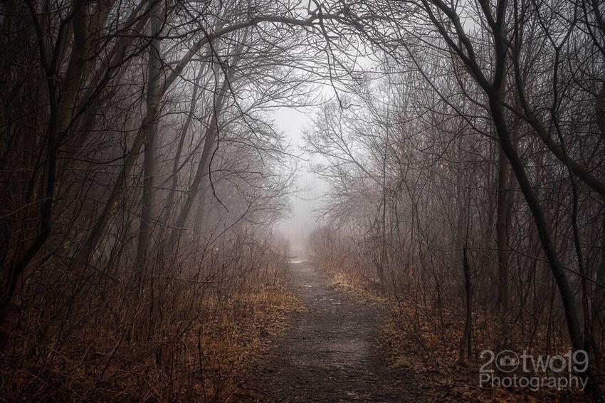 Morning Trail Trail Hiking Hiking Trail Foggy Morning Fog Foggy Morning Sonya7 Trees Woods