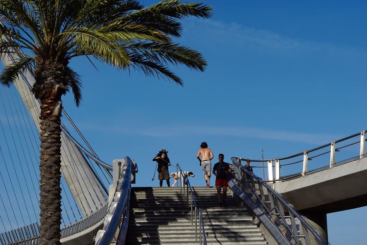 Architecture Bridge - Man Made Structure Built Structure Clear Sky Day Dog Peeing Leisure Activity Lifestyles Low Angle View Men Outdoors Palm Tree People Railing Real People Sky Staircase Steps Steps And Staircases Togetherness Tree Walking Women The Street Photographer - 2017 EyeEm Awards