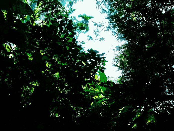 Plant Viet Nam Bymyphone Sunnyday 🌸🌷🌿