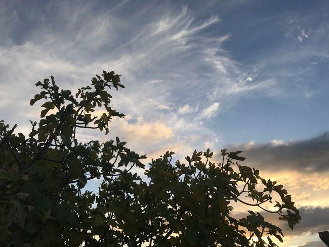 #Radhime Sky Tree Day Albania Scenics Radhime