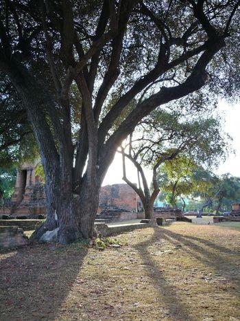 Temple in Ayutthaya, Thailand Ayutthaya Outdoors Sky Sunset Temple Thailand ThailandTemple Thailandtravel Travel Destinations
