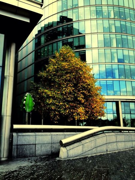 London Nature and Building Steel, glass and Trees Contrast L'opera della natura e l'opera dell'uomo Me Around The World Colors Eye4photography  Autumn Colors