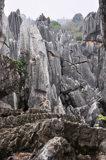 The spectacular stone forest scenery Daytime Hills Kunming,Yunnan,China Natural Beauty Nature Rock Stone Formation Tourist Winter Backgrounds Beauty In Nature Cliff Day Karst Mountain Landscape Mountains Nature No People Outdoors Peaks Scenery Stone Stone Forest Stone Forest Landscape Travel Destinations