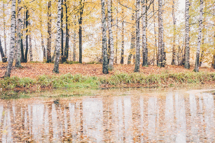 Autumn reflection in the water Reflection Autumn Beauty In Nature Day Forest Landscape Nature No People Non-urban Scene Outdoors Plant Reflections In The Water Scenics - Nature Tree Water WoodLand