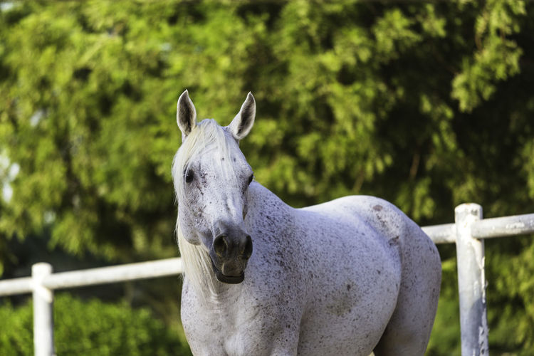 Close-up of white horse in ranch against trees