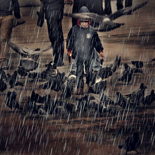 Bird Rain Istiklal Caddesi Taksim