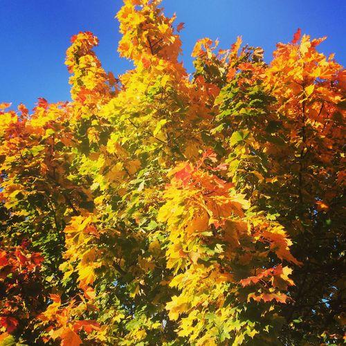 Autumn Colors Nature Autumn Leaves Autumn Leaf Leaves No People